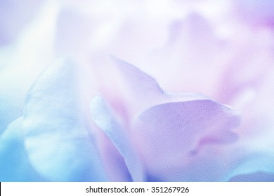 rose petals in winter color style on mulberry paper texture for background