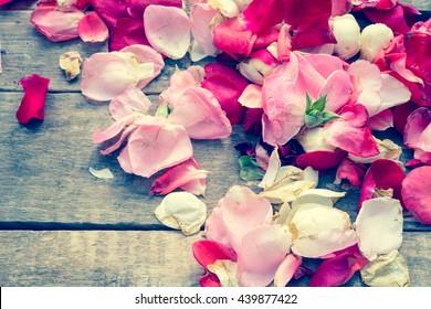 Rose petals/toned photo