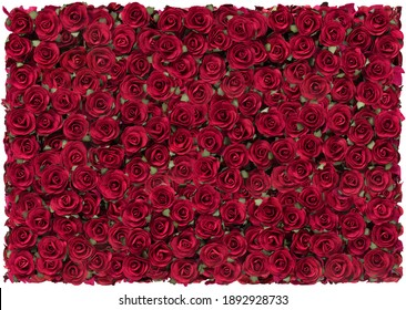 Rose Red beautiful background for valentines day.