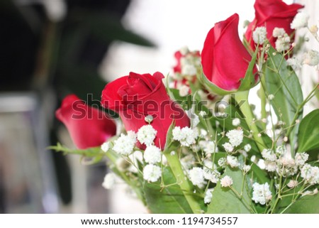 Rose Red Flower Love Gift Stock Photo Edit Now 1194734557