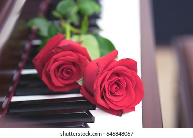 Rose of red put on piano keyboard with romantic concept.