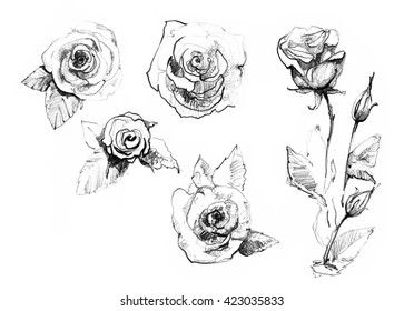 Rose Sketch Images Stock Photos Vectors Shutterstock