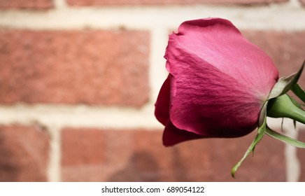 Rose (side view)