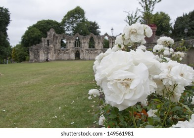 Rose at St Mary's Abbey, York, United Kingdom