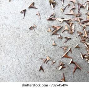 Rose Thorns on Concrete