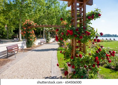 Rose trellis and garden at beach of lake Balaton, in Balatonfured, Hungary