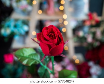 rose in Valentine's day