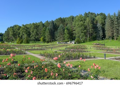 Rose Valley in the resort park in Kislovodsk. Summer landscape with blooming roses.