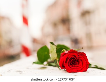Rose and Venice Italy Background