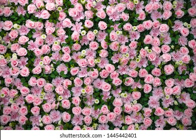 rose wall background texture bloom pink