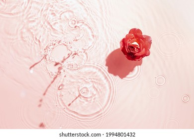 Rose water background. Floral arrangement, splash of water. Top view. Copy space