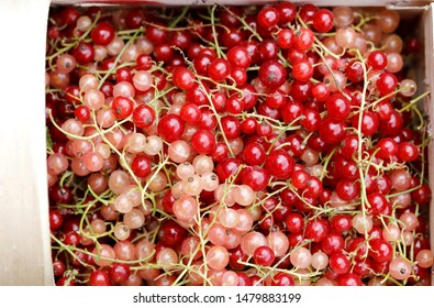 Rose or white currant, red currant , pink currant berries in basket, fresh fruit background. Close up