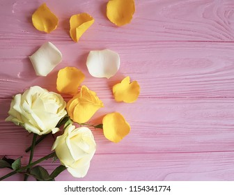 rose yellow on pink background frame