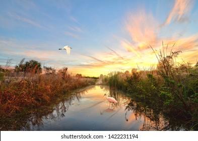 Roseate and Great White Heron Enjoying Florida's Sunrise.