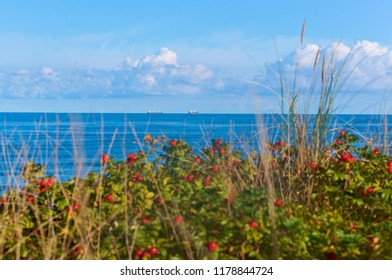 rosehip bushes on the beach, two ships on the horizon