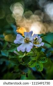 rosehip flowers artistically
