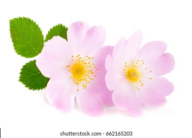 Rosehip flowers with leaf isolated on white background