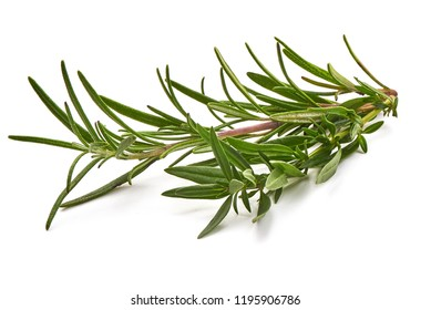 Rosemary branch, close-up