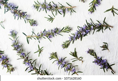 Rosemary branches in blossom on white background top view
