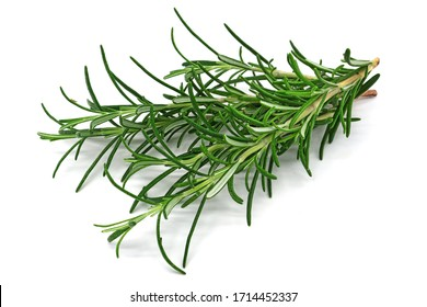 Rosemary, close up of scented green herb on white background