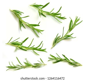 Rosemary collection isolated