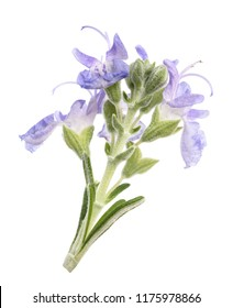 Rosemary  flowers isolated on white background