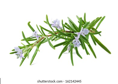 rosemary with flowers isolated on white
