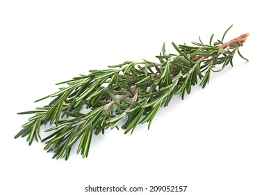 Rosemary herb closeup isolated on white background