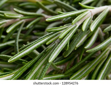 Rosemary herb closeup view background