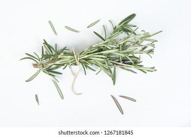 Rosemary Herb green fragrant branch on white background