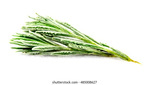 Rosemary herb isolated.Raster illustration oil painted rosemary on white background.