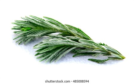 Rosemary herb with shadow.Raster illustration oil painted rosemary on white background.