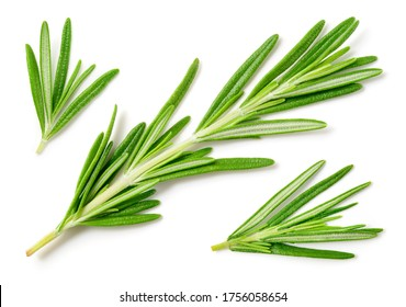 Rosemary isolated on white background. Top view rosemary twig set. Green herbs isolated on white.