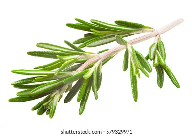 rosemary isolated on white background with clipping path