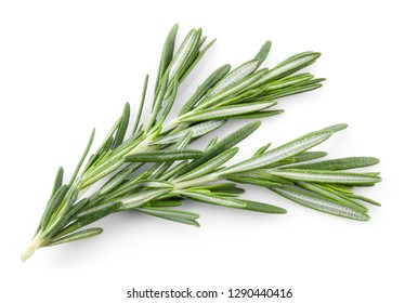Rosemary isolated. Rosemary on white. Top view.