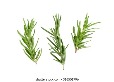 Rosemary Leaf Herbal is Spices Isolated over White Background