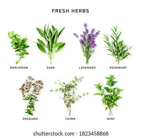 Rosemary, mint, lavender, sage, marjoram and thyme collection. Creative layout with fresh herbs bunch on white background. Top view, flat lay. Floral design. Food and alternative medicine concept