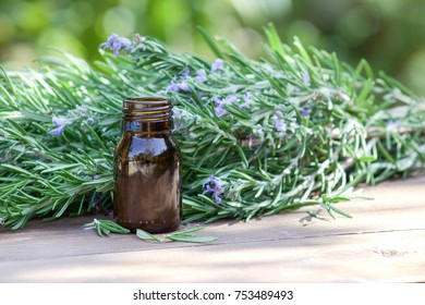 Rosemary oil and rosemary plant. Healing herbs.