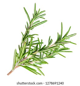 Rosemary organic  herb isolated on the white background, macro
