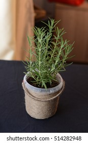 rosemary plant in a basket, rosemary inside a diy pot, rosmarinus officinalis, black background