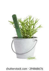 Rosemary plant with flower tag in tin bucket isolated on white background