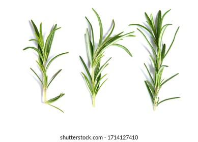 Rosemary plants isolated on white background