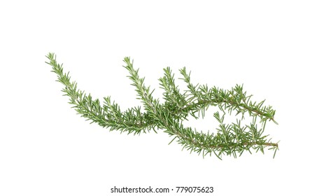 Rosemary, Rosmarinus officinalis, isolated on white