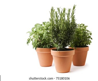 Rosemary, sage and oregano herbs isolated on white