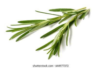 rosemary sprigs  isolated on white background