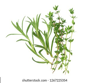 rosemary with thyme leaves isolated on white background