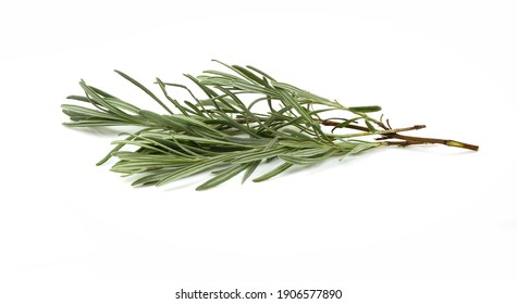 rosemary twig isolated on white background.
