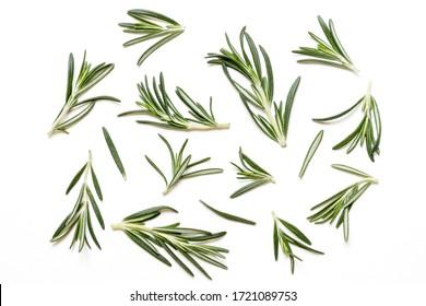 Rosmarinendamm und Blätter einzeln auf weißem Hintergrund. Draufsicht