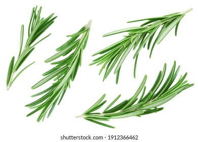 Rosemary twig and leaves isolated on white background. Collection