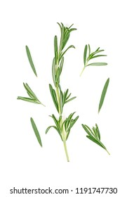 Rosemary twig and leaves on a white background. Top view.